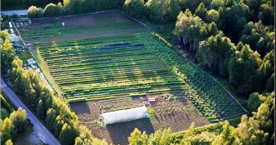 ekologiska, ekologisk, ekologiskt, egna grönsaker, hemleverans, ekolådor, ekolåda