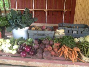 Eko egen odlade grönsaker