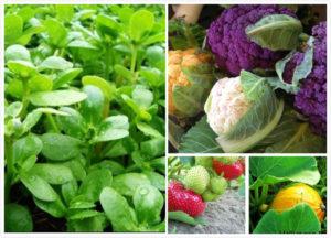 EKO egenodlade grönsaker